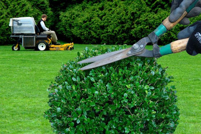 entretien d 39 espace vert et de jardin en eure et loir
