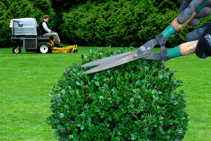 Entretien d 39 espace vert et de jardin en eure et loir for Entreprise entretien espace vert