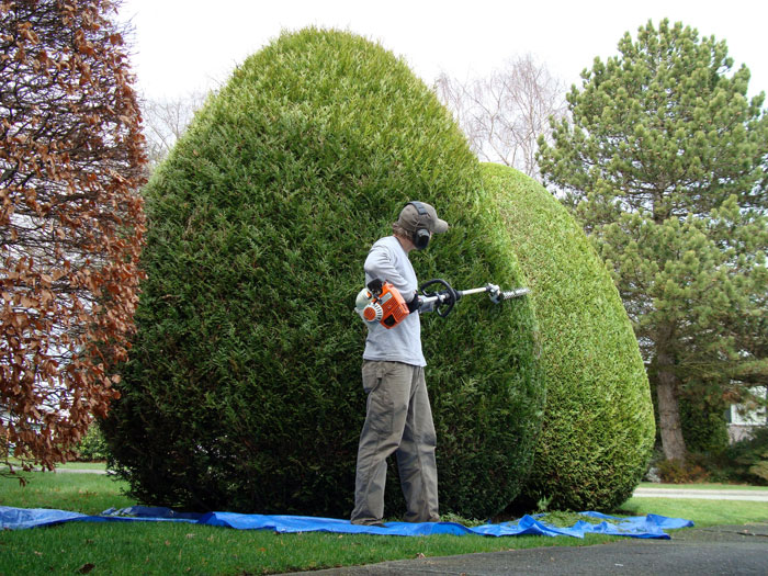 Entretien d 39 espace vert et de jardin en eure et loir for Entretien jardin eure et loir